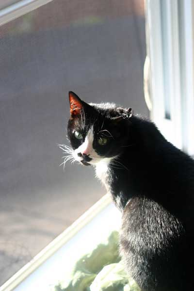My cat Charlie2