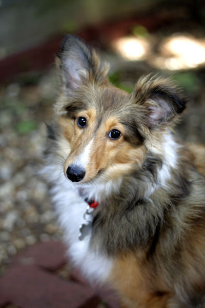 Pet Portrait of Stella