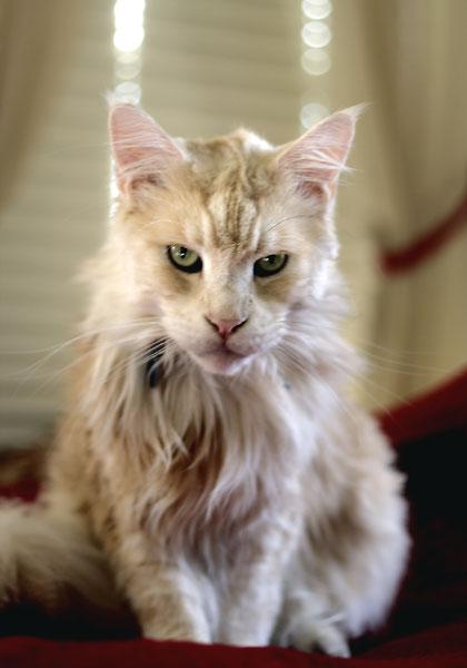 My clients' cat Zeus
