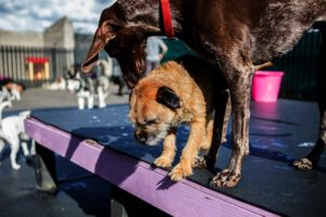 Doggy Daycare Cost: Prices Near You In Philadelphia, PA