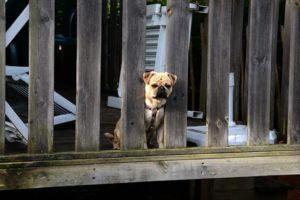 Read more about the article Dog Boarding Cost Philadelphia: How Much To Board A Dog?