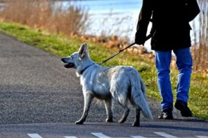 Read more about the article 5 Dog Walking Dangers and Safety Tips