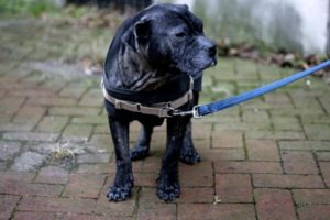 Read more about the article The Easy Walk Harness is the BEST for Dogs That Pull