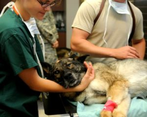 24 Hour Emergency Vet Hospital: Philadelphia, PA