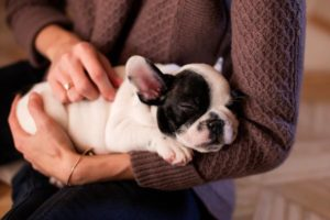 First-Time Dog Owner? 17 Tips For New Dog Owners