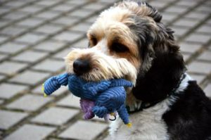 new dog owner tips: toys and other things to buy