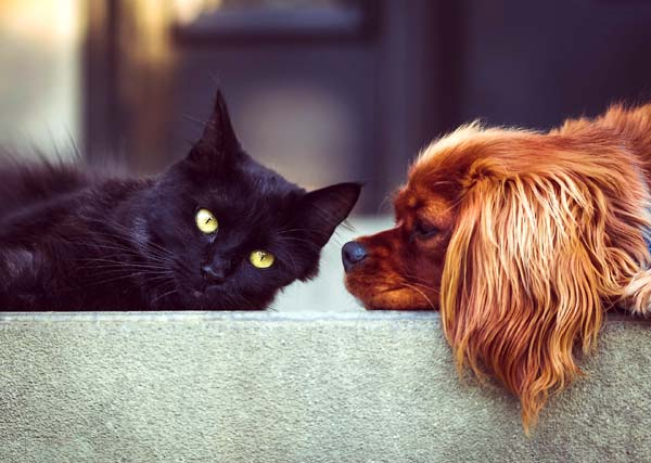 Read more about the article Pet Service Rates, Costs & Locations: Philadelphia, PA