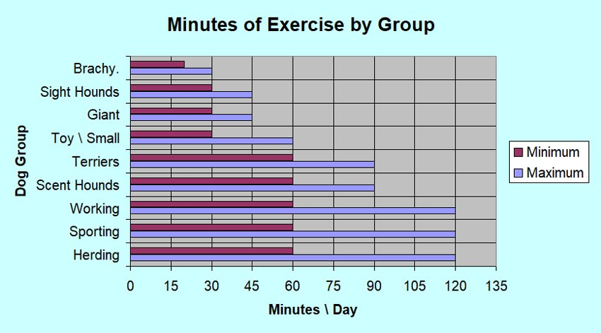 Dog Exercise Needs by Breed and Group