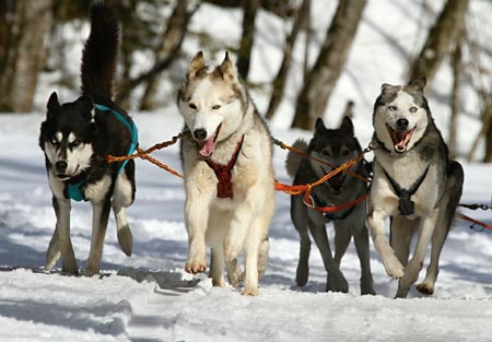 Exercise levels for Working Dogs