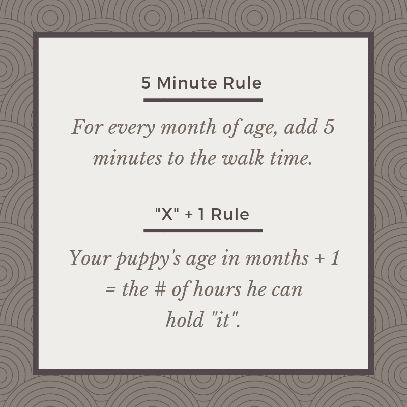 Puppy exercise & bladder rules