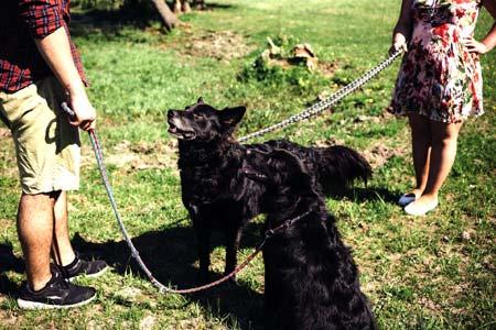 Better social life benefit of having a dog