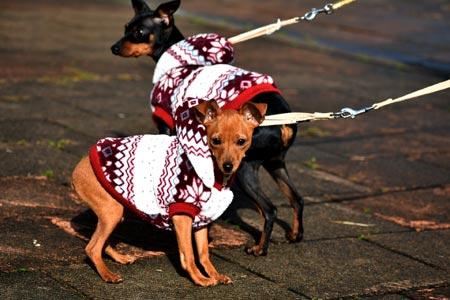 Dog walker job descriptions involve dog handler skills