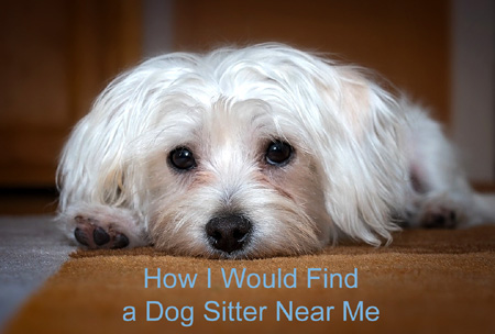 how to find a dog sitter near you