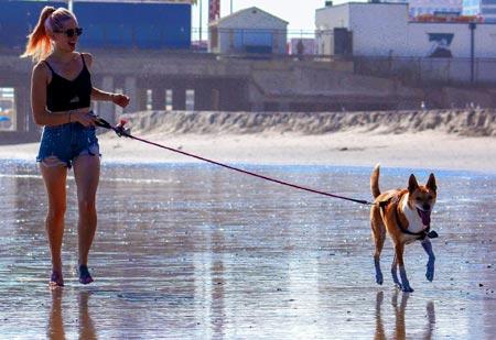 Dog walker job description: weather conditions