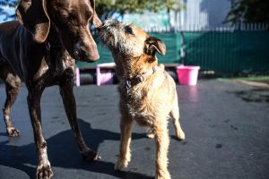 Read more about the article 9 Philadelphia Dog Parks: Find A Park Near You