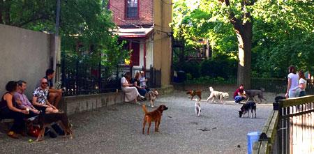 Maio Lanza dog park in Philadelphia