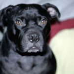 Losing A Pet: Having To Put My Dog To Sleep
