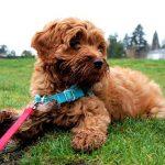 Dog Walker Job Description: Daily Journal & Schedule