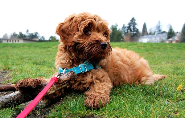 Read more about the article Dog Walker Job Description: Daily Journal & Schedule
