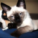 Dog Breeds Good With Cats: Dogs And Cats Living Together