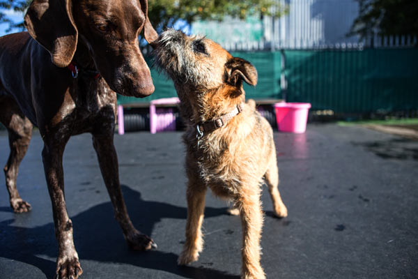 Read more about the article Dog Daycare: Benefits of Taking Your Pup to Doggie Daycare