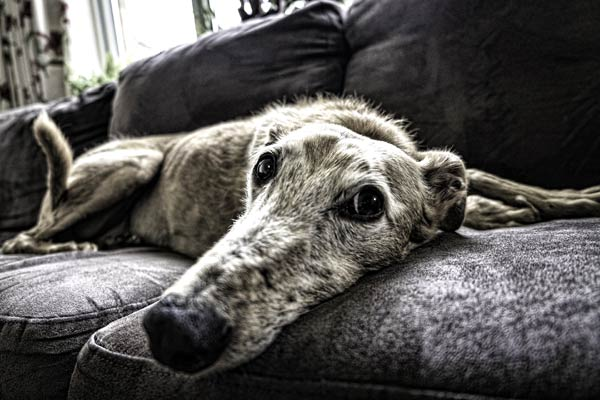 In-Home Dog Sitting: Dog Sitters That Stay At Your Home