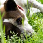 List Of 18 Wild Plants That Are Toxic To Dogs