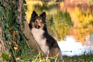 17 Wild & Ornamental Trees Poisonous To Dogs