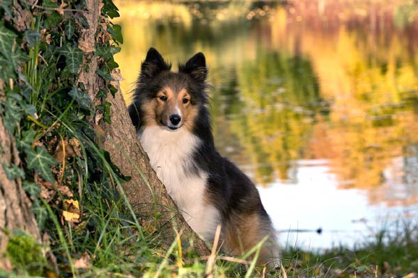 Read more about the article 17 Wild & Ornamental Trees Poisonous To Dogs