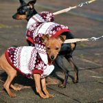 Dog Walking Schedule: Guidelines For Your Pet Business