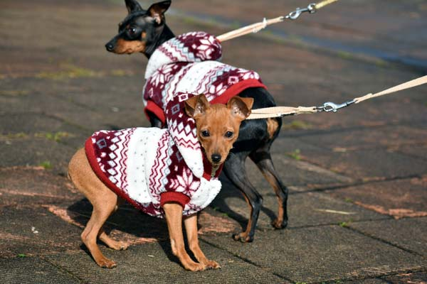 Read more about the article Dog Walking Schedule: Guidelines For Your Pet Business