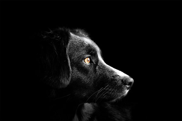 Dog Walking Business Name & Website (Online Presence)