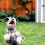 Best Dog Training Treats (Positive Reinforcement)