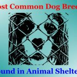 Most Common Dog Breeds Found In Shelters