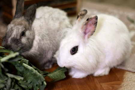 Food care for pet rabbits