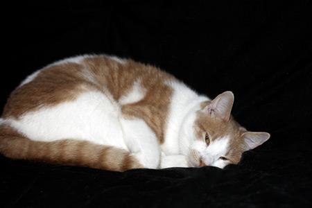 My pet cat sleeping