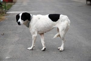 Read more about the article Lost Pet Websites (Philadelphia)
